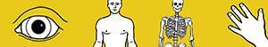 Colorear Cuerpo humano